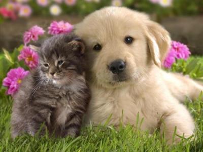 животные,дом,гармония