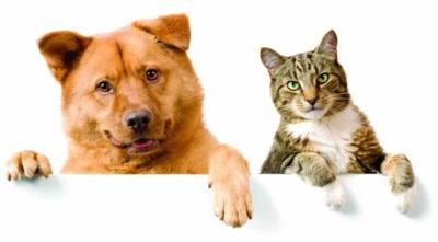 домашние животные,собака,кошка,птица,грызуны