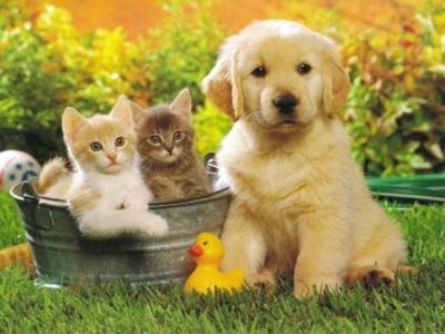 парень,собаки,кошки,птички,хомяки,животные