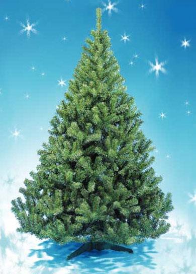 елка,живая елка,искусственная елка,новый год,зима,иголки