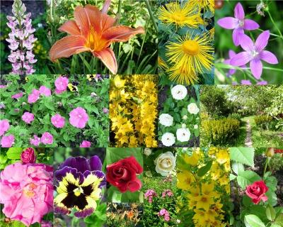 Какие цветы сажаем в июле 145