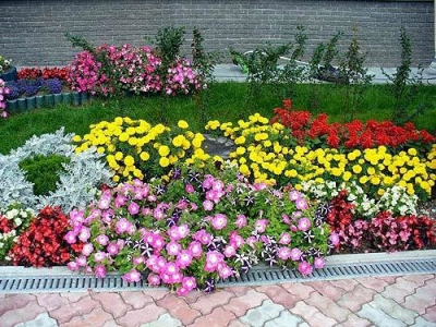 дача,цветы,участок,красота,весна,лето,солнце,отдых,дачный участок