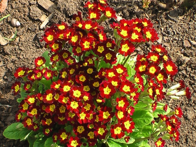 май,сад,дача,дачный участок,цветы,цветение,почва,полив