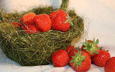клубника,дача,сад,выращивание клубники,уход,полив,ягоды