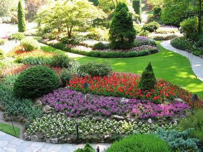 сад,участок,дача,весна,лето,осень,кустарники,декоротивные кустарники