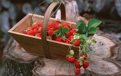 земляника,свойство земляники,польза,ягода,старение,запор,иммунитет