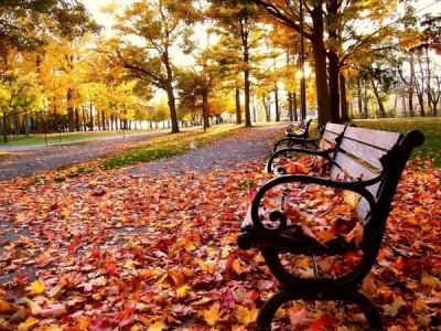 осень,иммунитет,здоровье,травяной чай,рецепт,холод,дождь