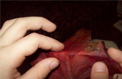 поделки,осень,осеннии поделки,листья.краски,цвета.букет,аквариум