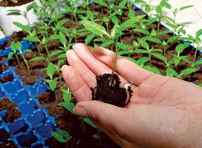 урожай,огород,сад,рассада,земля,уход,семена,болячки,грунт
