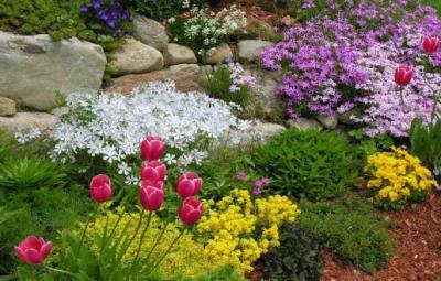 сад,огород,цветы,осень,луковица,тюльпаны,мускари,крокусы,гиацинты,нарцисы,дачный участок