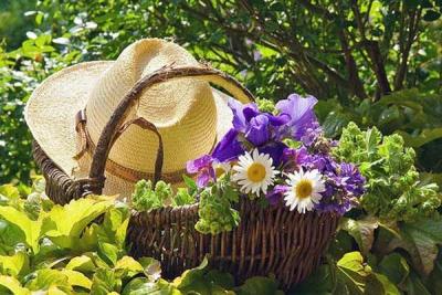 август,урожай,уход,работа в саду,дача,огород,работа