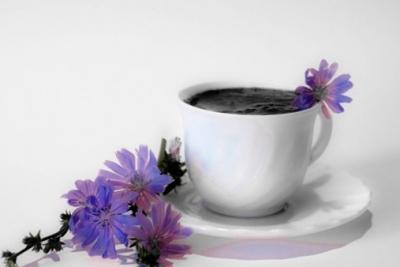цикорий,цветок,корень цикория,польза,вред,чай,напиток