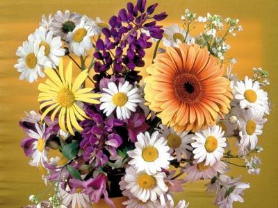 цветы,отношения,влюбленные,гвоздика,роза,ромашка,пионы,тюльпаны