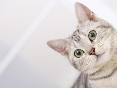 кошка,кот,запах,моча,квартира,уксус,сода,перекись водорода,животное