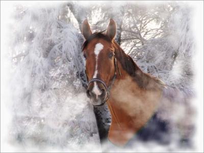 смс,стихи,поздравления,новый год,новогодние поздравления,год лошади,лошадь