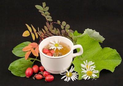 кишечник,травы,сборы,лечение,здоровье,лекарства