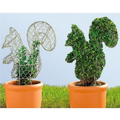 сад,дача,участок,растения,топиарий,ароматный топиарий,видео,кусты,зелень,фигурки,плющ