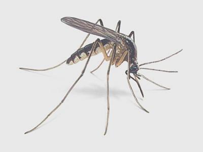 комары,аромат,дача,лес,укус,запах,насекомое,лето