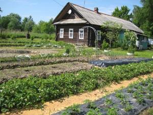 сад,огород,участок,вредители,дача,борьба