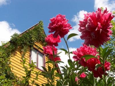 сад,дача,растения,цветы,садовод,бархатцы,настурция,календула,петуния,лаванда